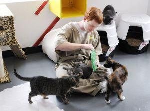 Pendelton-Prison-Cats